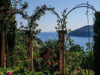 Rosenbogen bepflanzen