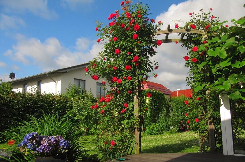 Rosenbogen bepflanzen aber wie