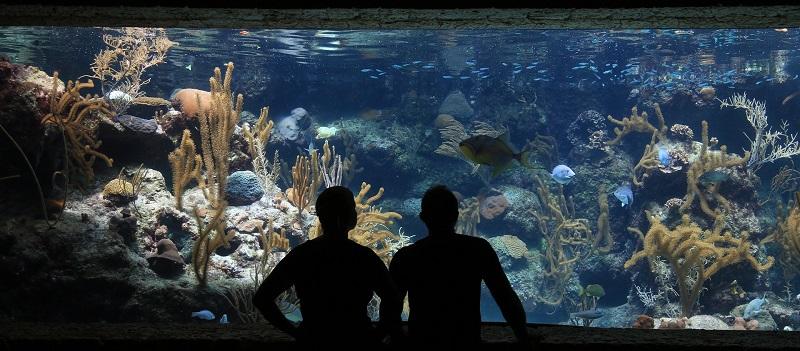 Aquarienunterschrank
