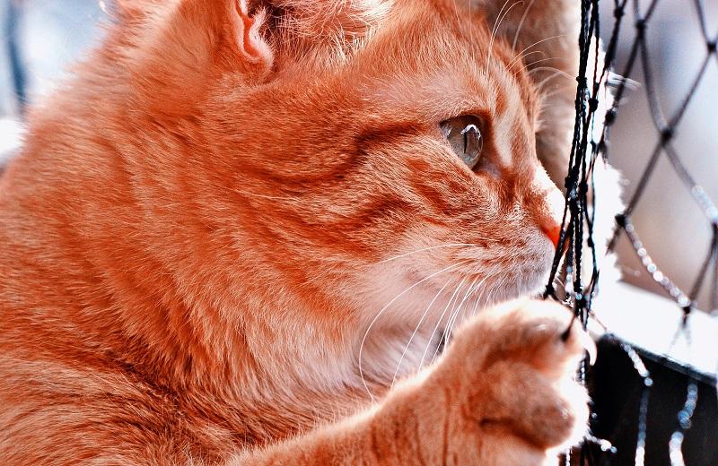 Katzennetz - Anbringen